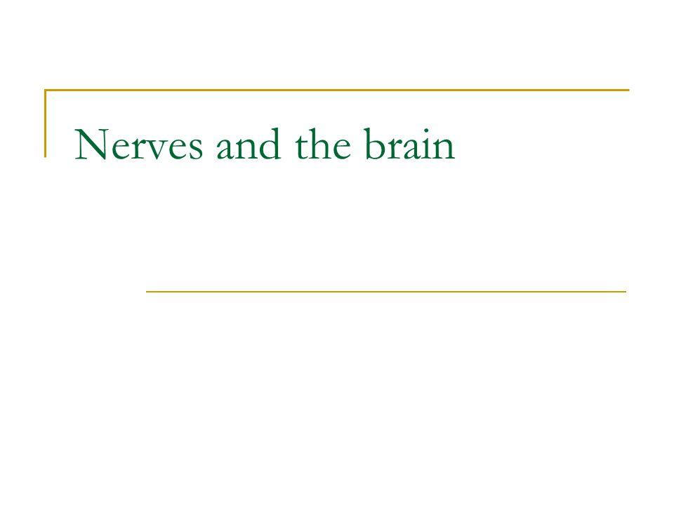 Nerves and the brain