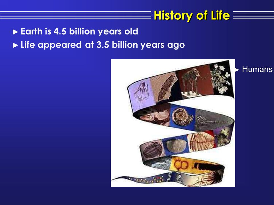 ► Humans ► Earth is 4.5 billion years old ► Life appeared at 3.5 billion years ago History of Life