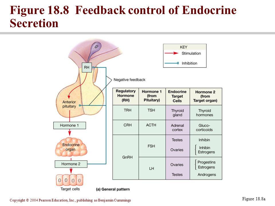 Copyright © 2004 Pearson Education, Inc., publishing as Benjamin Cummings Figure 18.8a Figure 18.8 Feedback control of Endocrine Secretion