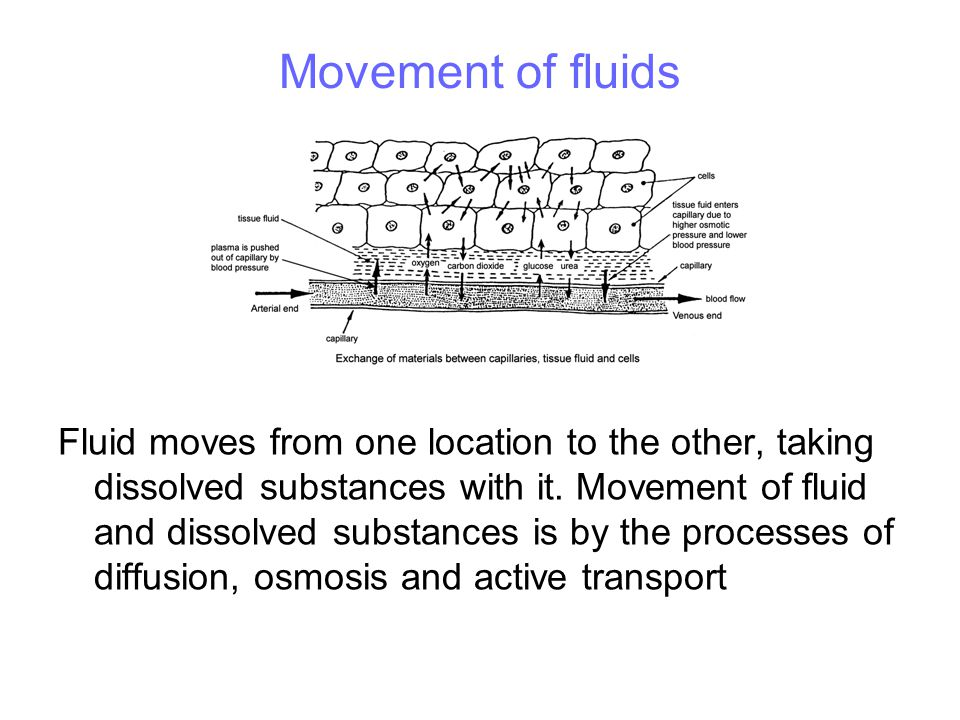 Diffusion through membranes Membranes are differentially permeable Permeable substances (eg small particles) move through Impermeable substances (eg large particles) can't move through Movement is from areas of high concentration to areas of low concentration Energy is not needed