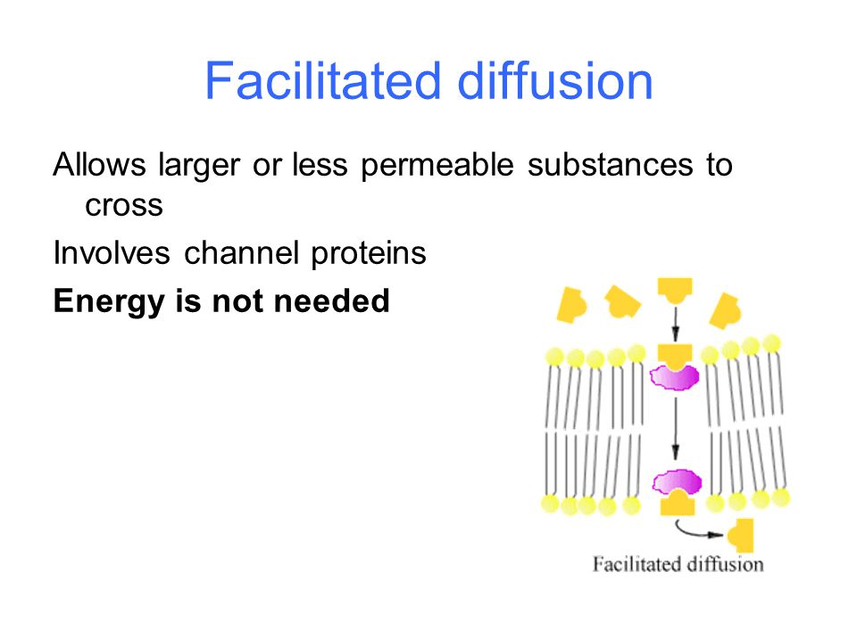 Facilitated diffusion Allows larger or less permeable substances to cross Involves channel proteins Energy is not needed