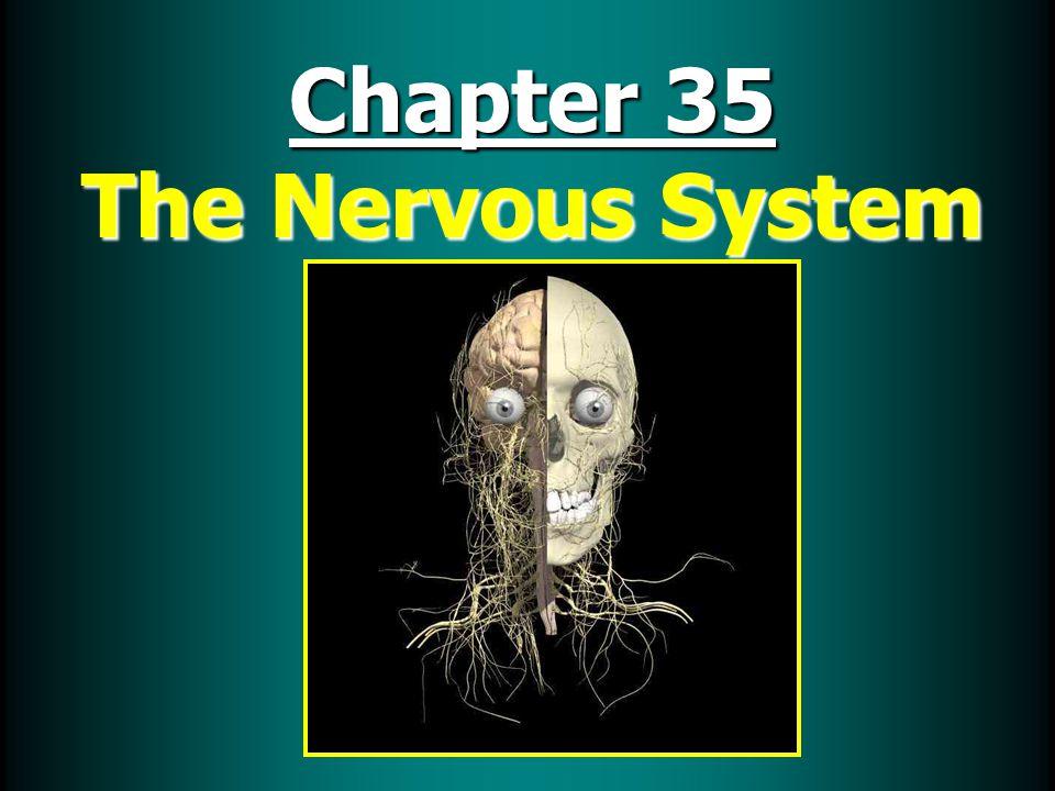  Brain has 4 main parts: CerebrumCerebrum CerebellumCerebellum Brain stemBrain stem HypothalmusHypothalmus CNS continued: