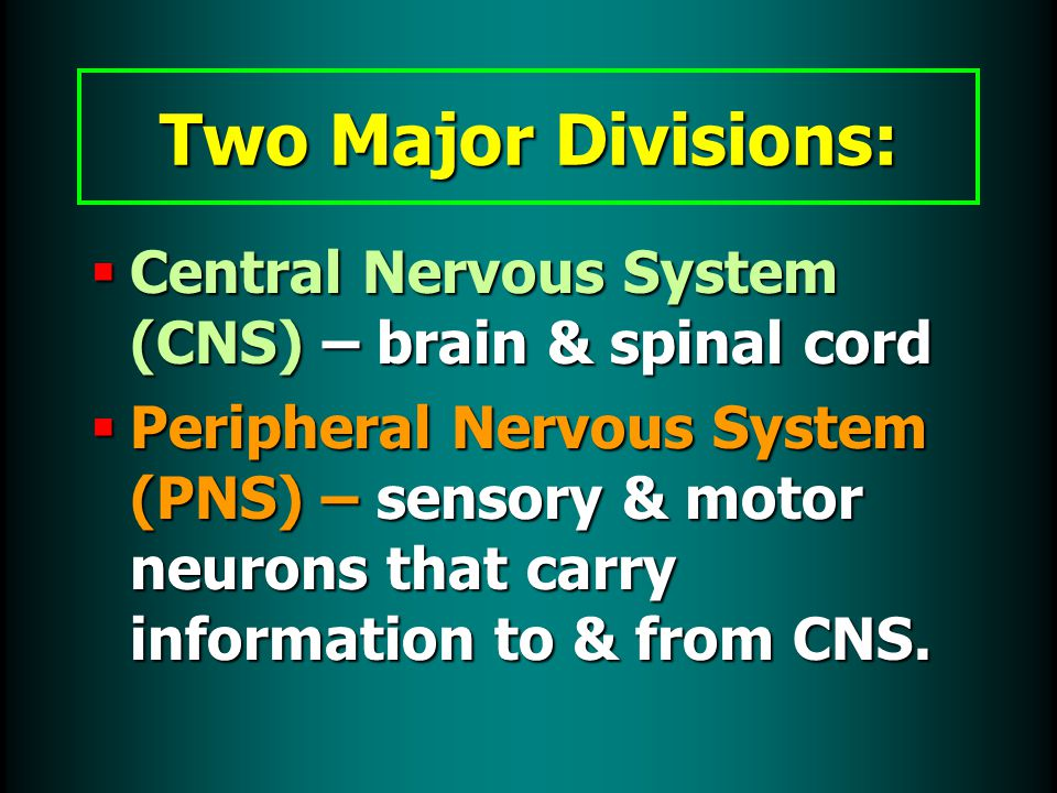  Central Nervous System (CNS) – brain & spinal cord  Peripheral Nervous System (PNS) – sensory & motor neurons that carry information to & from CNS.