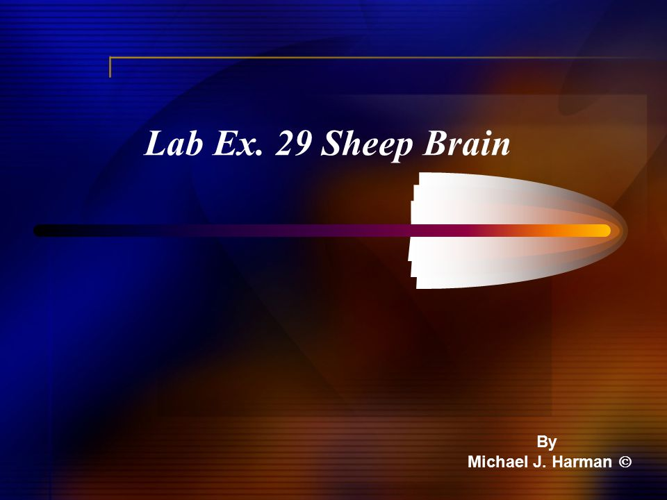 Lab Ex. 29 Sheep Brain By Michael J. Harman 