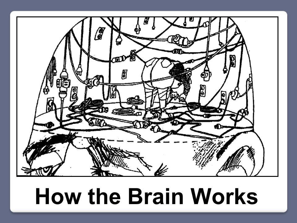 Tan's Brain (1861) http://blogs.scientificamerican.com/literally-psyched/2013/02/08/the-man-who-couldnt- speakand-how-he-revolutionized-psychology/