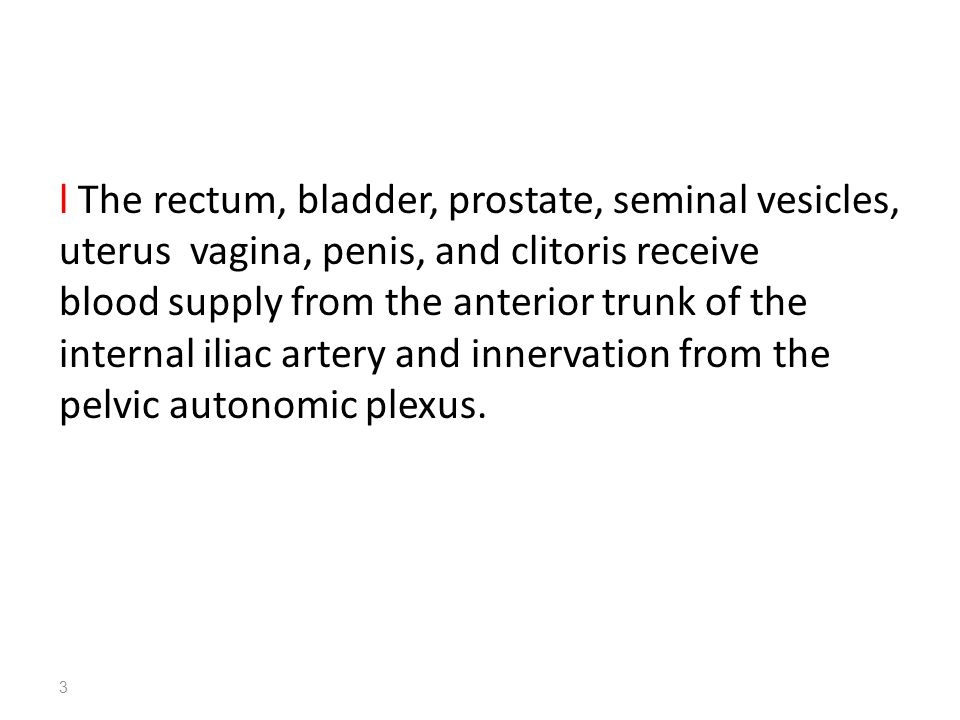 l The rectum, bladder, prostate, seminal vesicles, uterus vagina, penis, and clitoris receive blood supply from the anterior trunk of the internal ili