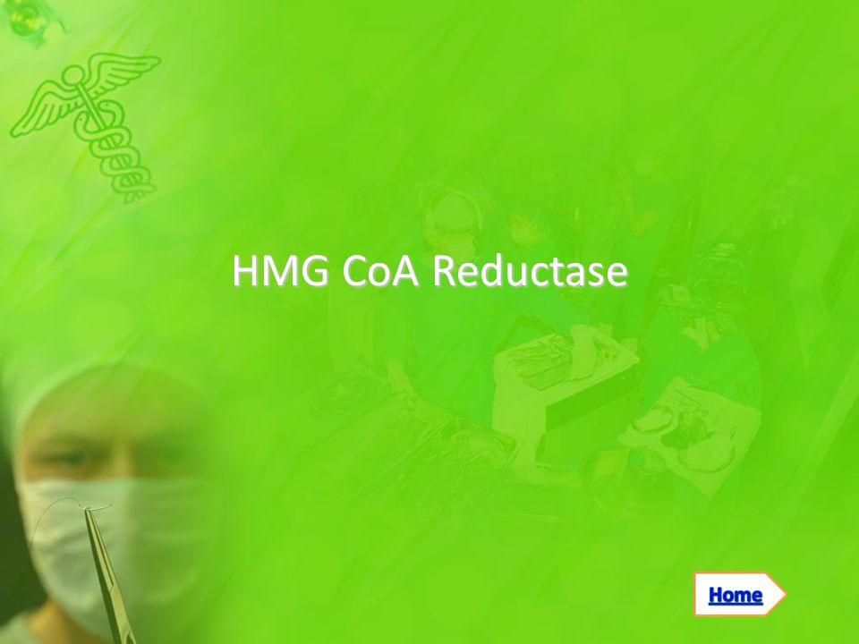 HMG CoA Reductase