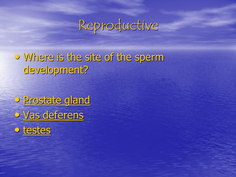 Reproductive Where is the site of the sperm development.