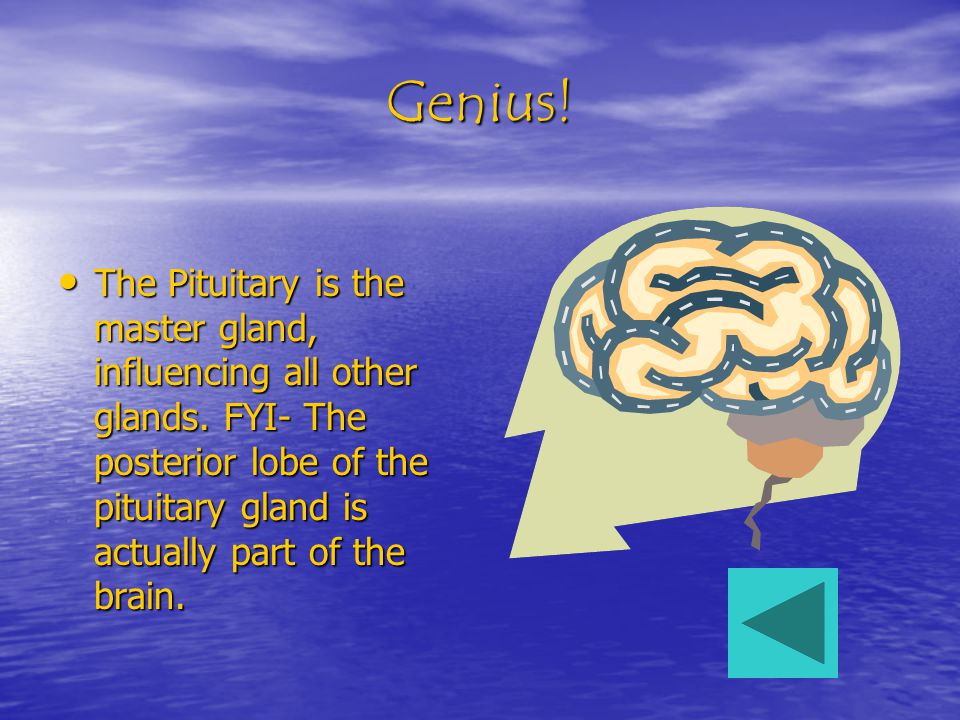 Genius. The Pituitary is the master gland, influencing all other glands.