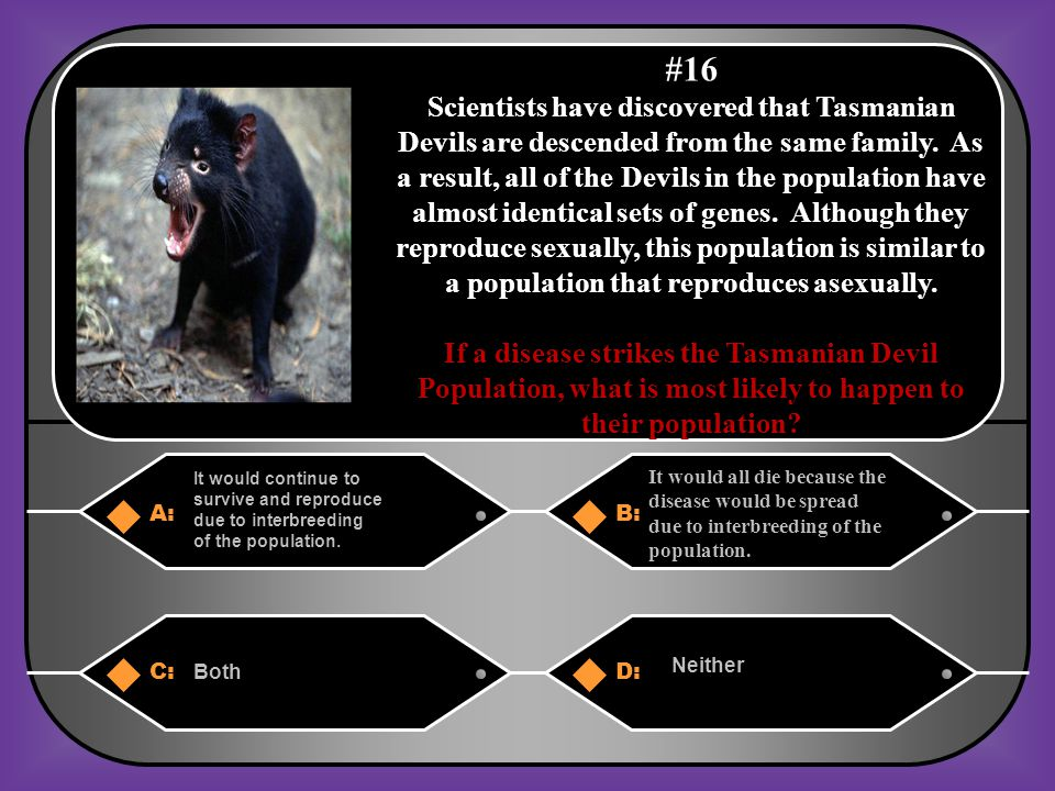 A. Because of interbreeding within the same population of Devils with identical genes.