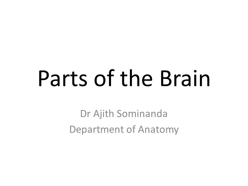 Parts of the Brain Dr Ajith Sominanda Department of Anatomy