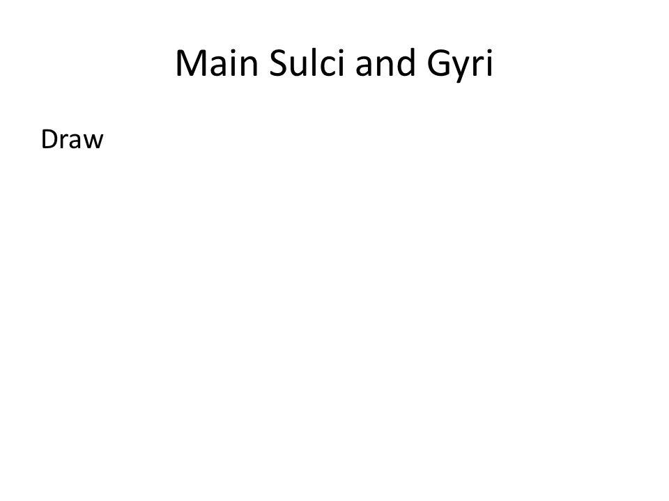 Main Sulci and Gyri Draw