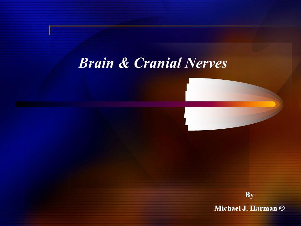 Brain & Cranial Nerves By Michael J. Harman 
