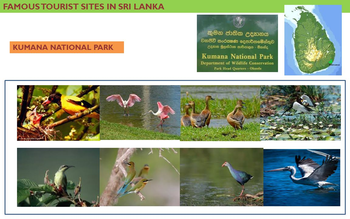 FAMOUS TOURIST SITES IN SRI LANKA KUMANA NATIONAL PARK