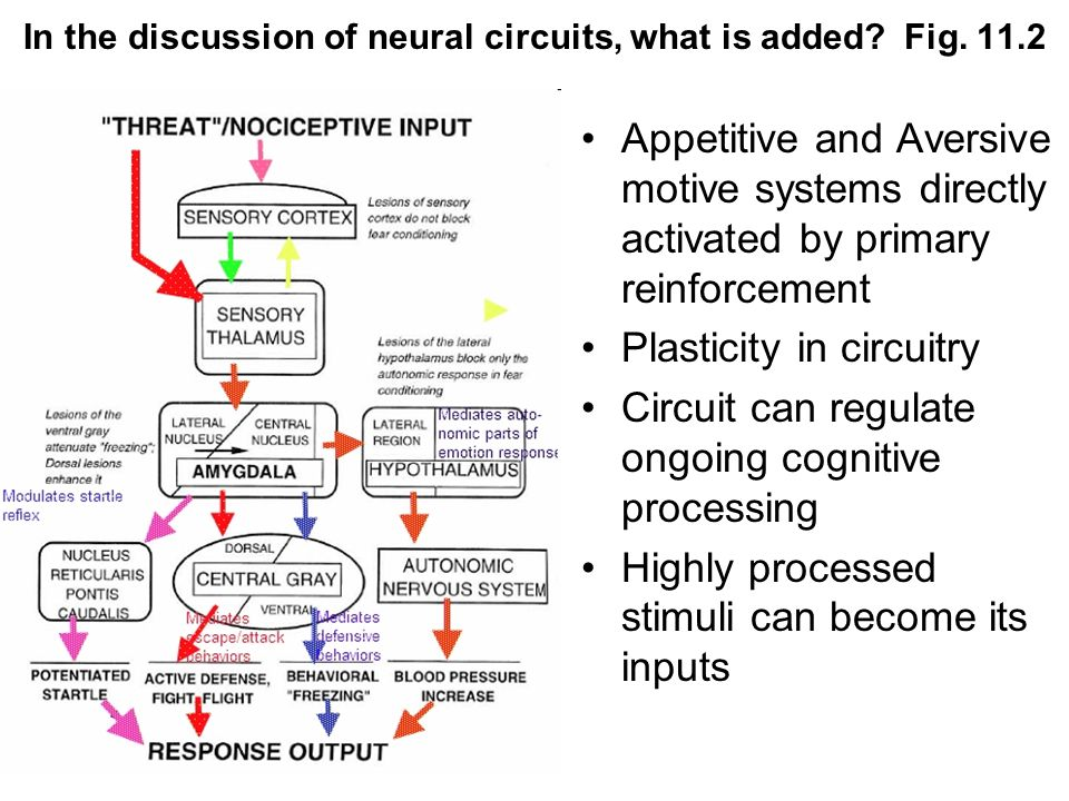 In the discussion of neural circuits, what is added? Fig. 11.2 Appetitive and Aversive motive systems directly activated by primary reinforcement Plas