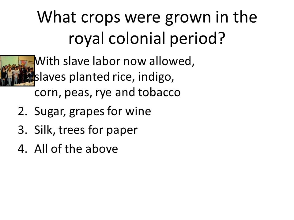 What crops were grown in the royal colonial period.