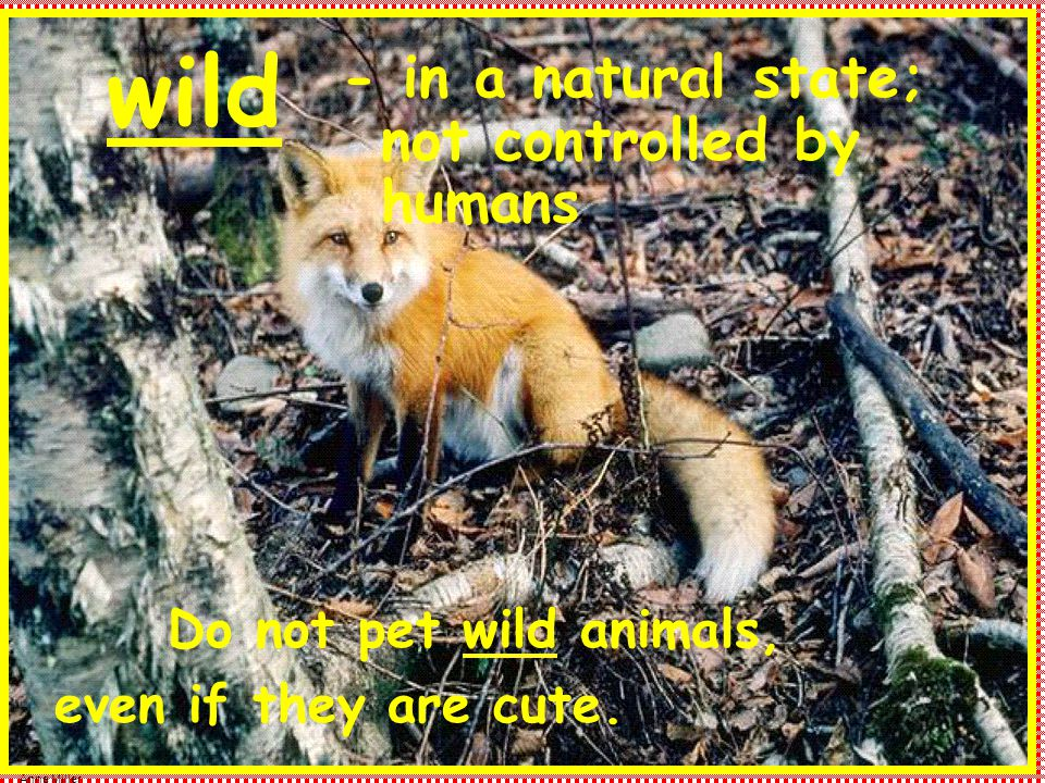 Anne Miller wild - in a natural state; not controlled by humans Do not pet wild animals, even if they are cute.