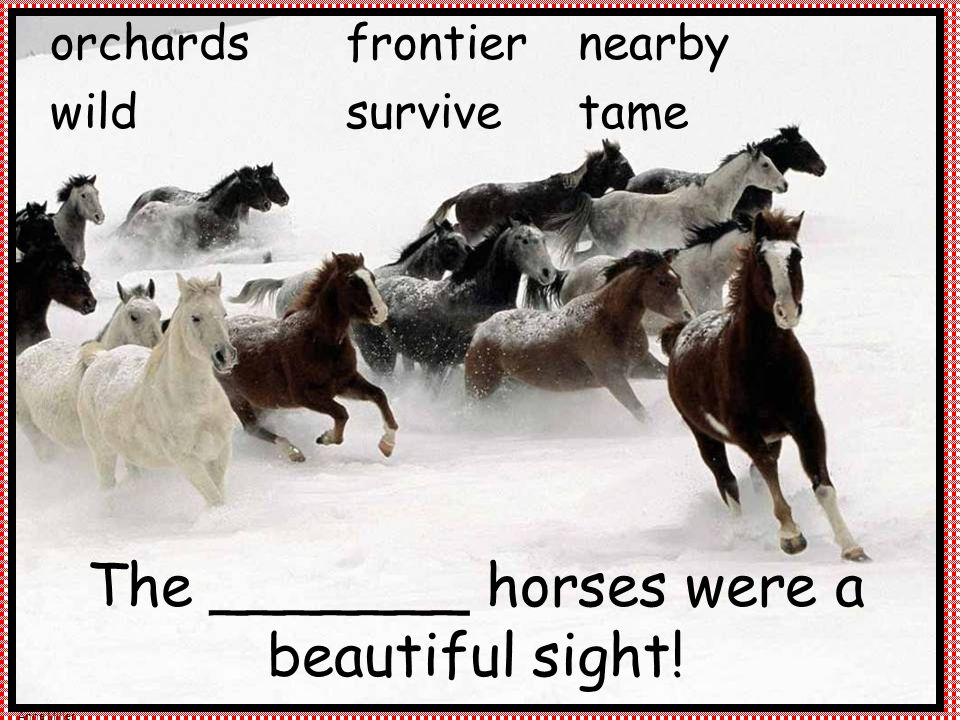 Anne Miller The _______ horses were a beautiful sight! frontier survive orchards wild nearby tame