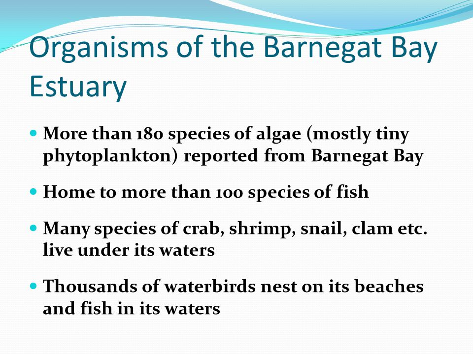 More than 180 species of algae (mostly tiny phytoplankton) reported from Barnegat Bay Home to more than 100 species of fish Many species of crab, shri