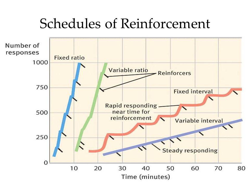 43 Schedules of Reinforcement