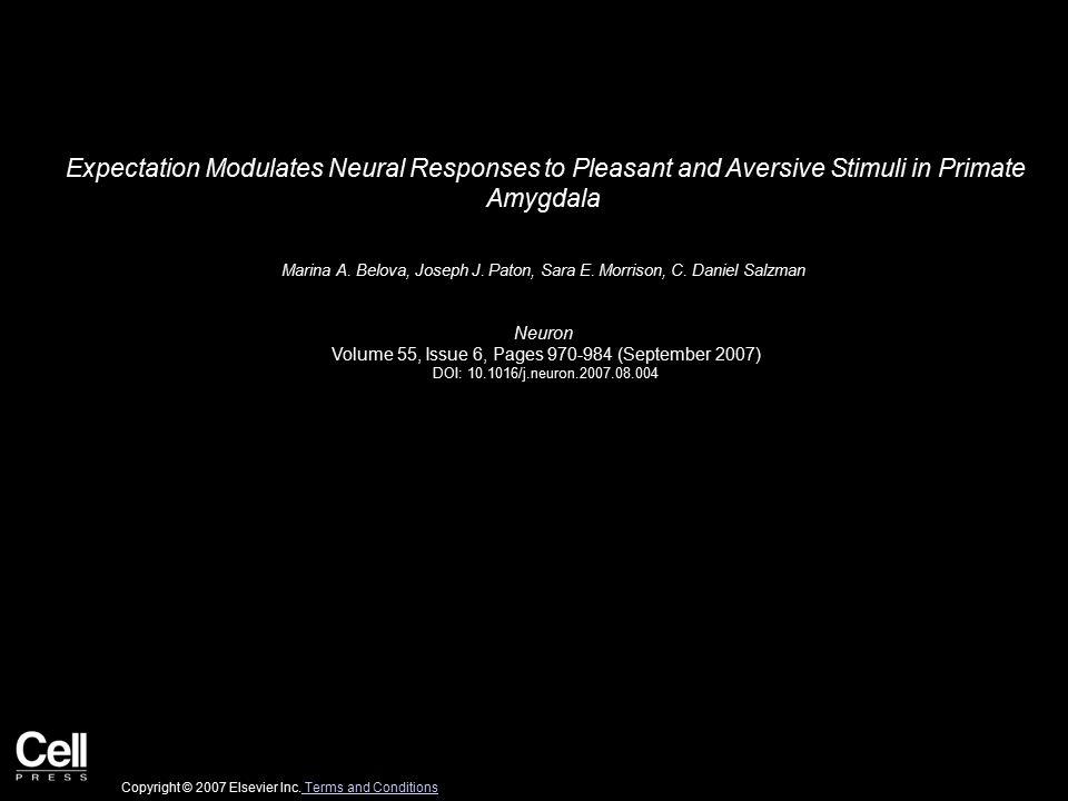 Figure 1 Neuron 2007 55, 970-984DOI: (10.1016/j.neuron.2007.08.004) Copyright © 2007 Elsevier Inc.
