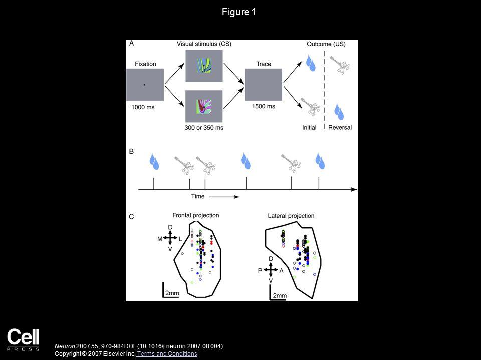 Figure 2 Neuron 2007 55, 970-984DOI: (10.1016/j.neuron.2007.08.004) Copyright © 2007 Elsevier Inc.