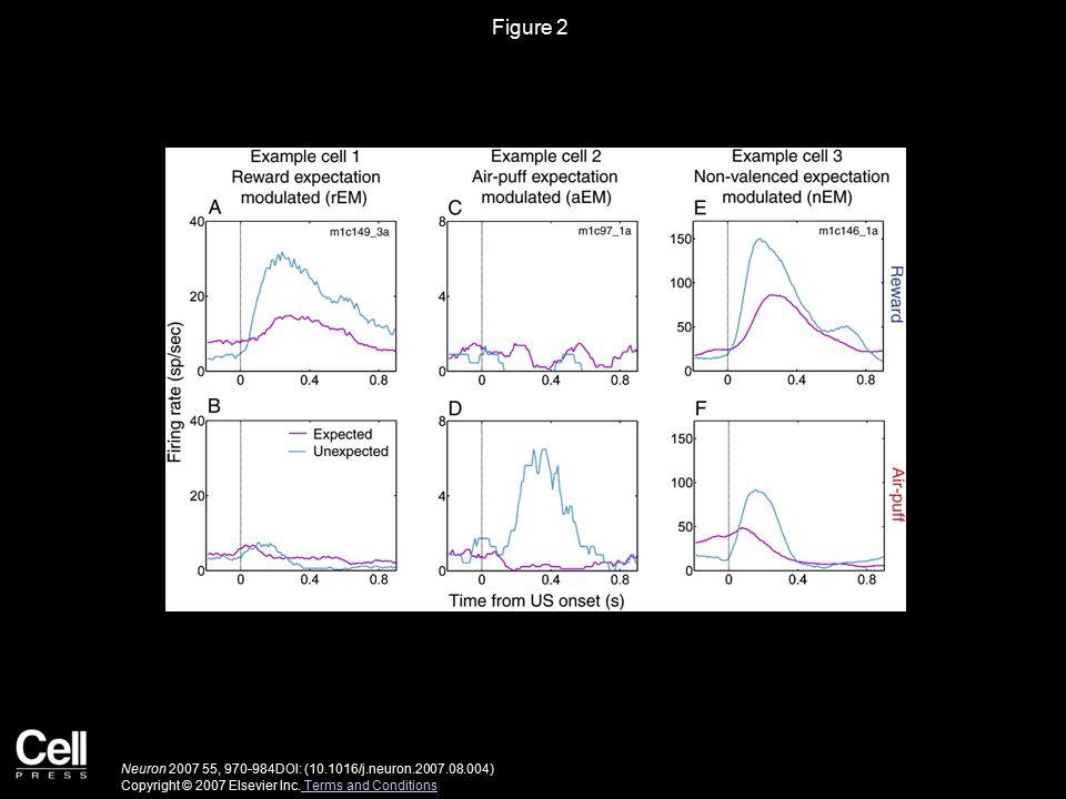 Figure 3 Neuron 2007 55, 970-984DOI: (10.1016/j.neuron.2007.08.004) Copyright © 2007 Elsevier Inc.
