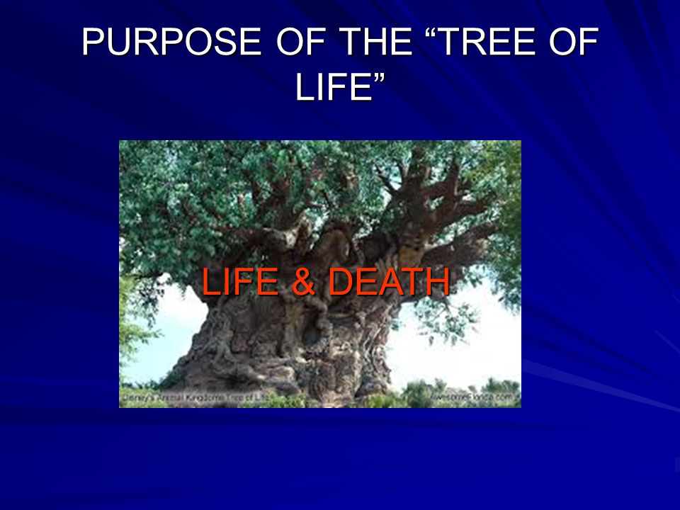 PURPOSE OF THE TREE OF LIFE LIFE & DEATH
