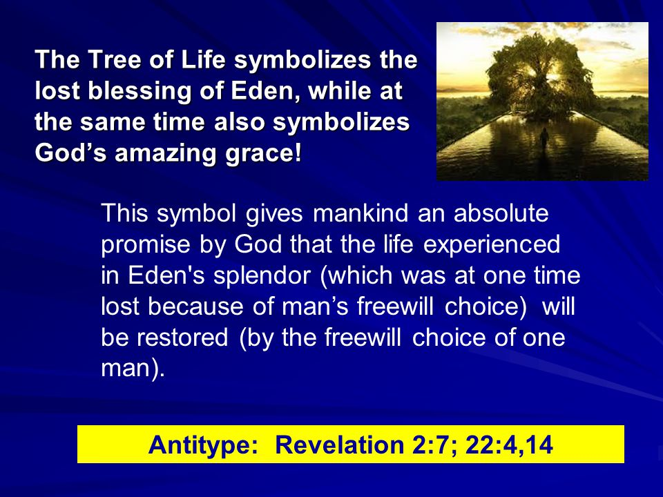 The Tree of Life symbolizes the lost blessing of Eden, while at the same time also symbolizes God's amazing grace.