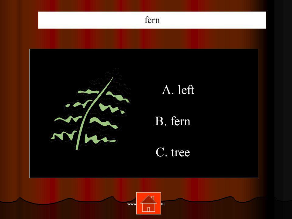 www.mrsziruolo.com A. left B. fern C. tree fern