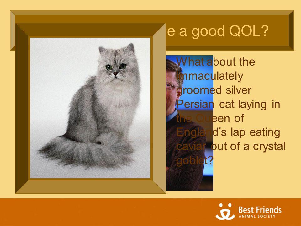 Does Bill Gates have a good QOL.