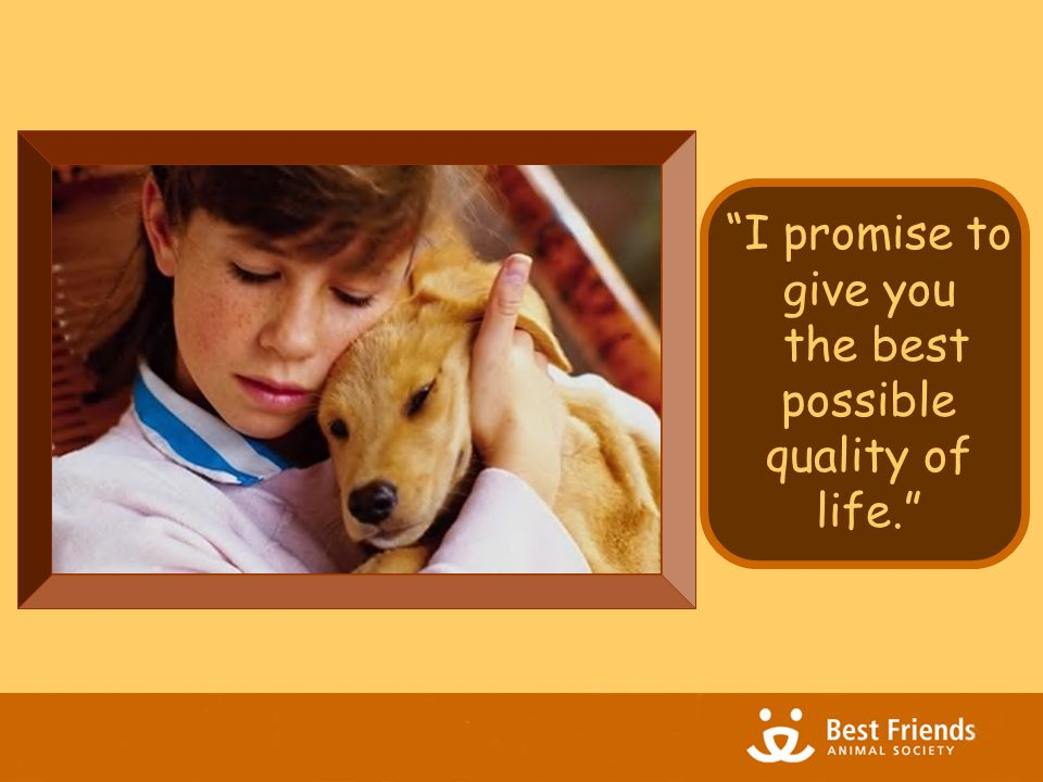 Everyone knows what quality of life is  When you ask a pet owner what she feels her dog's quality of life is, you don't have to explain to her what you mean.