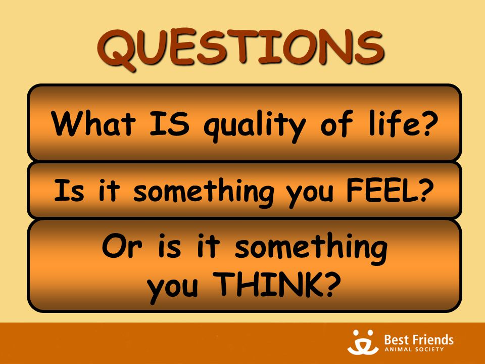 QUESTIONS What IS quality of life Is it something you FEEL Or is it something you THINK