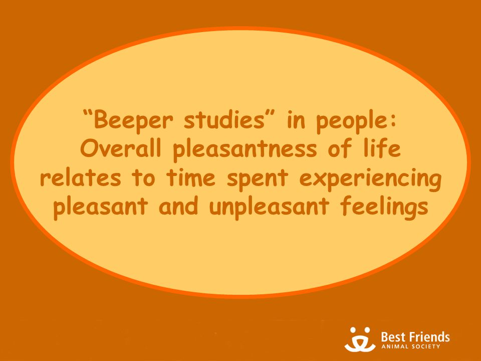 Beeper studies in people: Overall pleasantness of life relates to time spent experiencing pleasant and unpleasant feelings