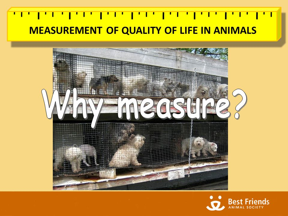 MEASUREMENT OF QUALITY OF LIFE IN ANIMALS