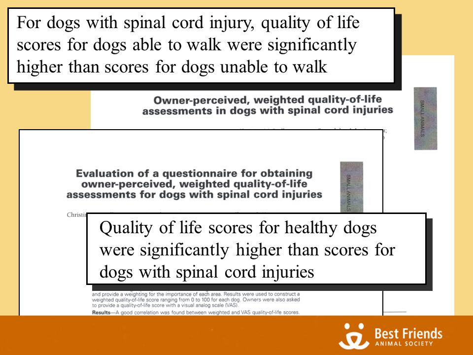 For dogs with spinal cord injury, quality of life scores for dogs able to walk were significantly higher than scores for dogs unable to walk Quality of life scores for healthy dogs were significantly higher than scores for dogs with spinal cord injuries