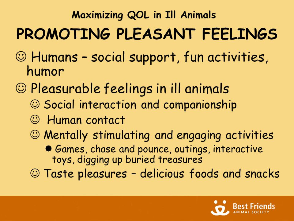 PROMOTING PLEASANT FEELINGS Humans – social support, fun activities, humor Pleasurable feelings in ill animals Social interaction and companionship Human contact Mentally stimulating and engaging activities Games, chase and pounce, outings, interactive toys, digging up buried treasures Taste pleasures – delicious foods and snacks Maximizing QOL in Ill Animals