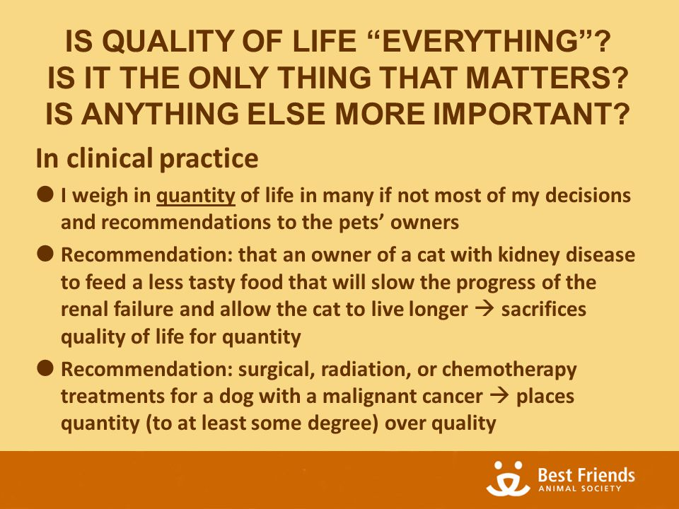 In clinical practice  I weigh in quantity of life in many if not most of my decisions and recommendations to the pets' owners  Recommendation: that an owner of a cat with kidney disease to feed a less tasty food that will slow the progress of the renal failure and allow the cat to live longer  sacrifices quality of life for quantity  Recommendation: surgical, radiation, or chemotherapy treatments for a dog with a malignant cancer  places quantity (to at least some degree) over quality IS QUALITY OF LIFE EVERYTHING .