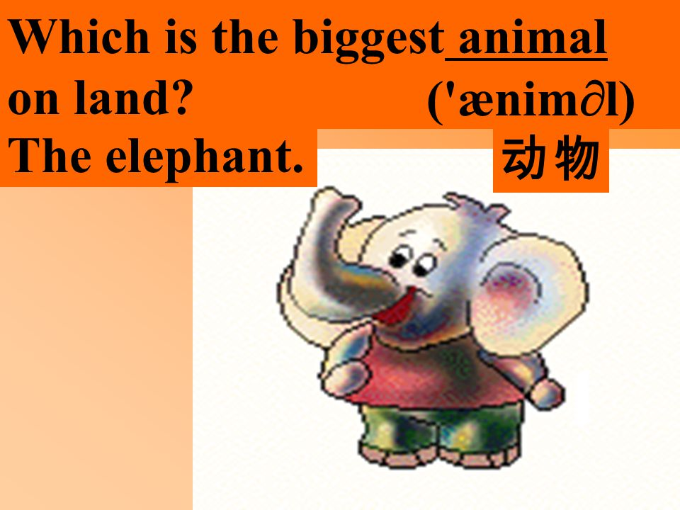 Which is the biggest animal on land ( ænim  l) The elephant. 动物