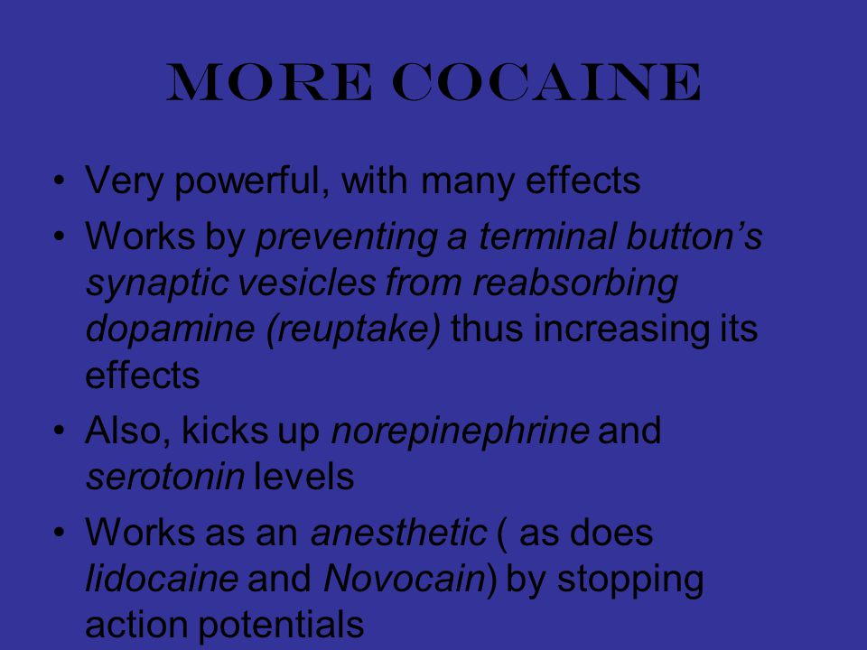 More cocaine Very powerful, with many effects Works by preventing a terminal button's synaptic vesicles from reabsorbing dopamine (reuptake) thus increasing its effects Also, kicks up norepinephrine and serotonin levels Works as an anesthetic ( as does lidocaine and Novocain) by stopping action potentials