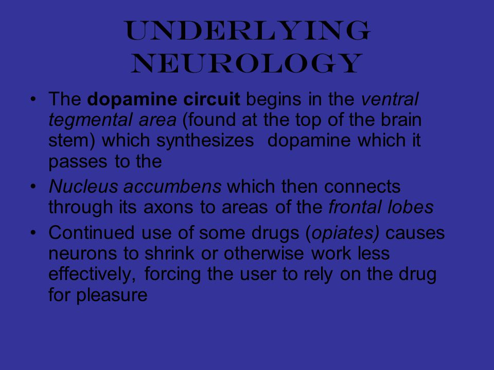Underlying neurology The dopamine circuit begins in the ventral tegmental area (found at the top of the brain stem) which synthesizes dopamine which it passes to the Nucleus accumbens which then connects through its axons to areas of the frontal lobes Continued use of some drugs (opiates) causes neurons to shrink or otherwise work less effectively, forcing the user to rely on the drug for pleasure