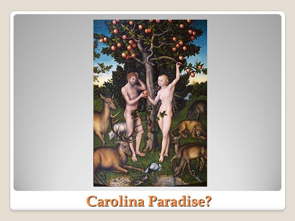 Carolina Paradise?