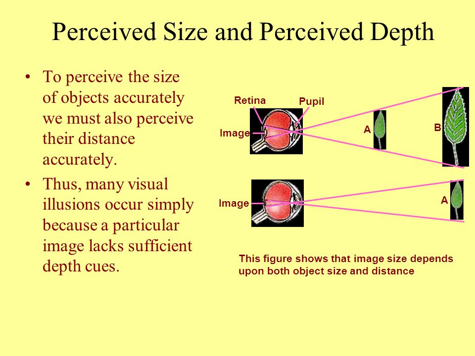 To perceive the size of objects accurately we must also perceive their distance accurately. Thus, many visual illusions occur simply because a particu
