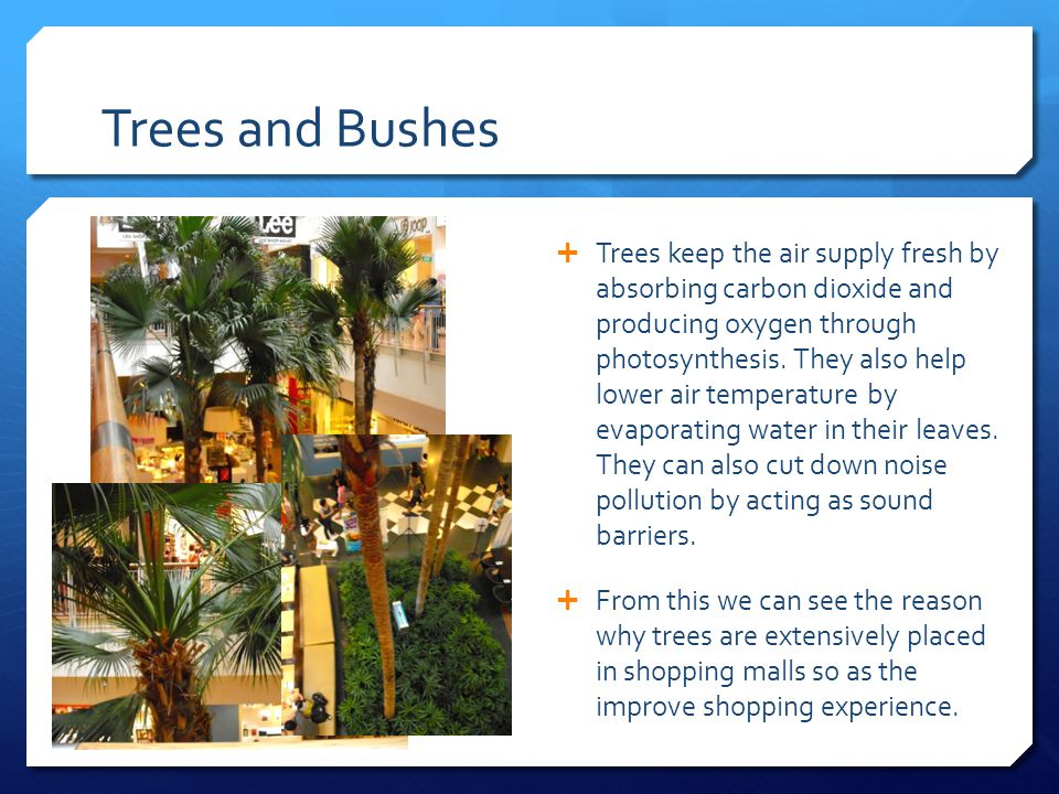 Trees and Bushes  Trees keep the air supply fresh by absorbing carbon dioxide and producing oxygen through photosynthesis.