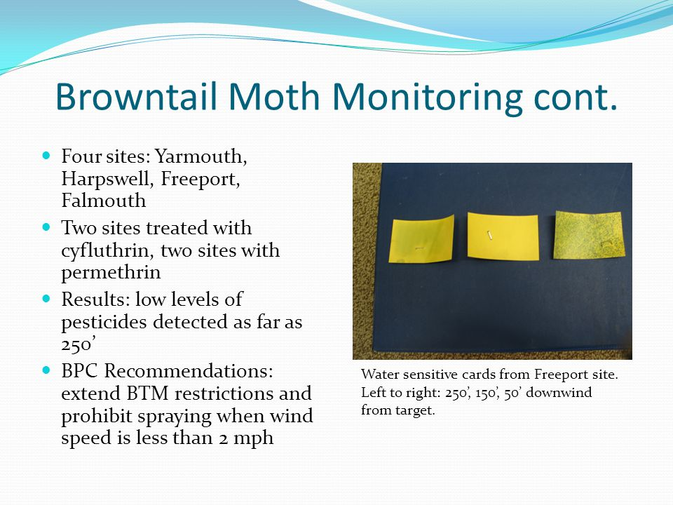 Browntail Moth Monitoring cont. Four sites: Yarmouth, Harpswell, Freeport, Falmouth Two sites treated with cyfluthrin, two sites with permethrin Resul