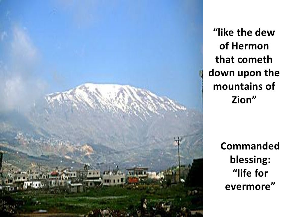 """""""like the dew of Hermon that cometh down upon the mountains of Zion"""" Commanded blessing: """"life for evermore"""""""