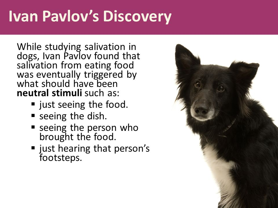 Ivan Pavlov's Discovery While studying salivation in dogs, Ivan Pavlov found that salivation from eating food was eventually triggered by what should