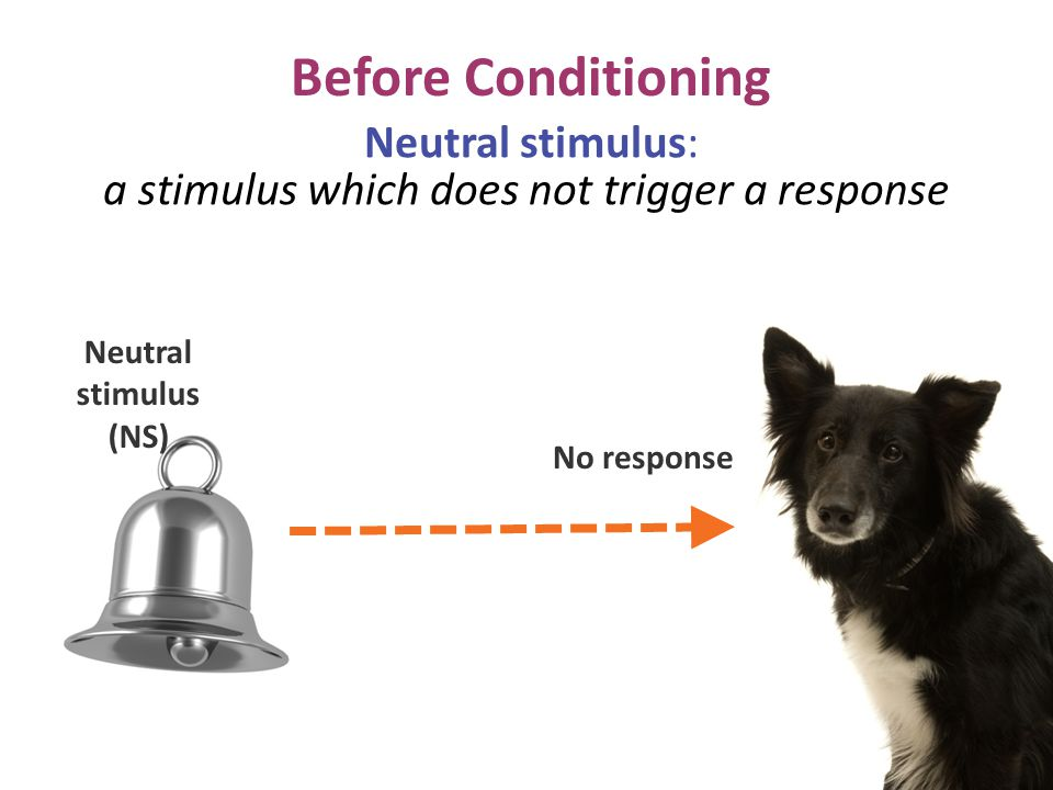 Before Conditioning No response Neutral stimulus (NS) Neutral stimulus: a stimulus which does not trigger a response