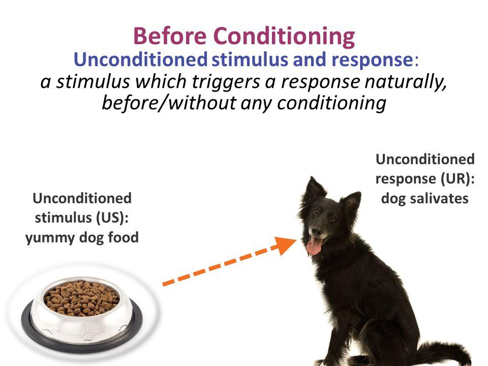 Unconditioned response (UR): dog salivates Unconditioned stimulus (US): yummy dog food Before Conditioning Unconditioned stimulus and response: a stim