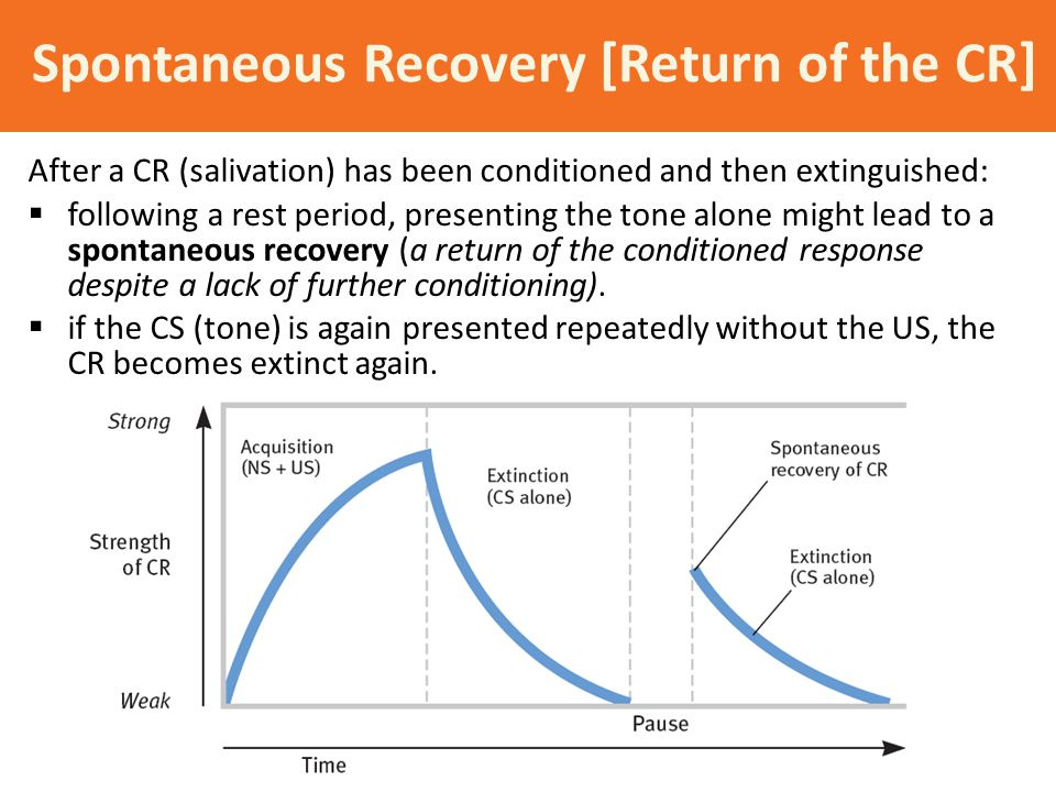 Spontaneous Recovery [Return of the CR] After a CR (salivation) has been conditioned and then extinguished:  following a rest period, presenting the